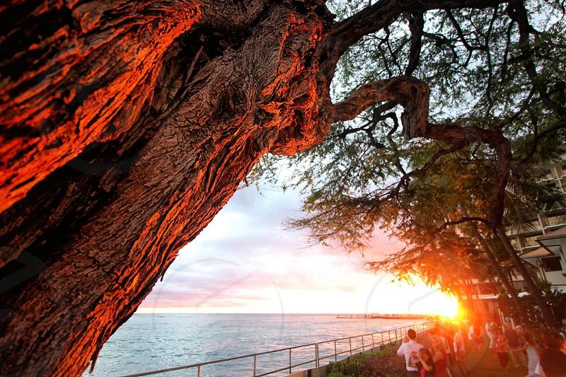Sunset at The House Without a Key on Waikiki. photo