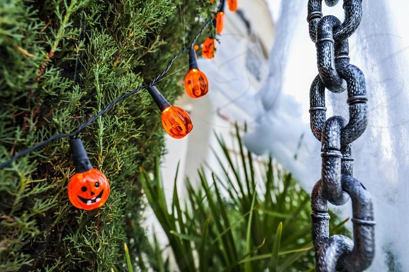 halloweendecorationholidayghostspookylightschainsilverorangegreenhousedesignilluminationtreespider web photo