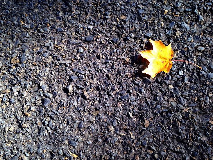 Leaf road rural yellow fall autumn solitude  photo