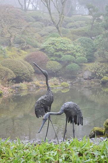 Foggy pond garden cranes photo