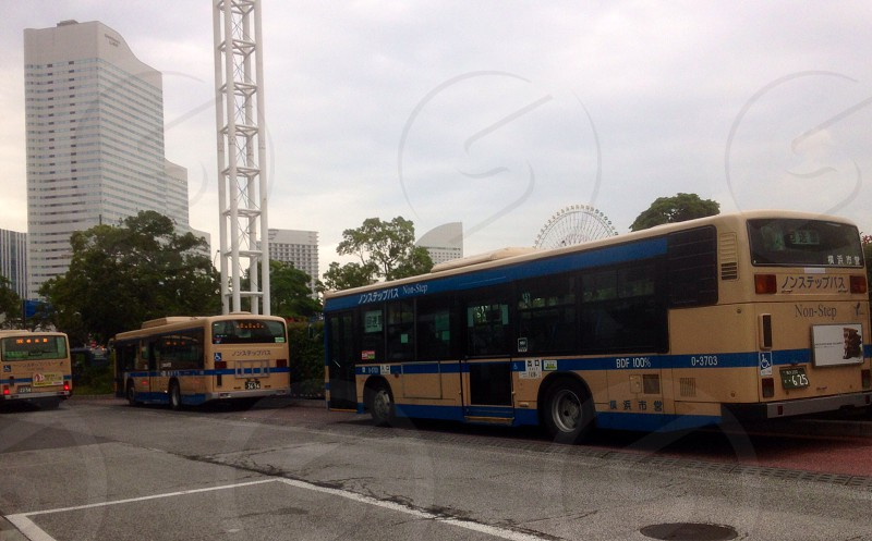 blue and yellow buses photo