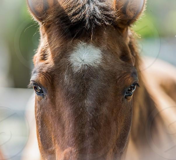 Horse divine love  photo