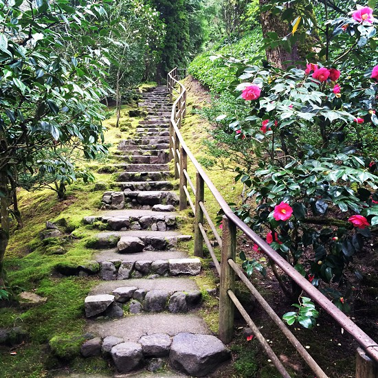 #stairs #steps #oregon photo