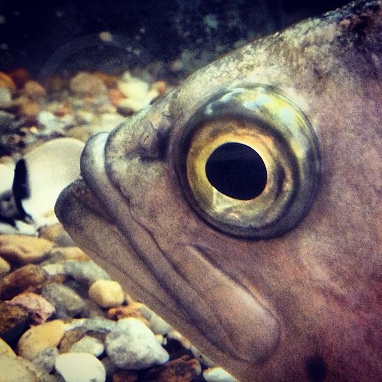 Close up of a fish's eye. photo