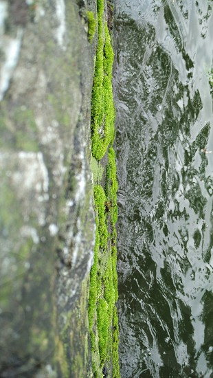 Green moss on the rock at the lakeside. At Sarangan Lake Magetan East Java Indonesia. photo