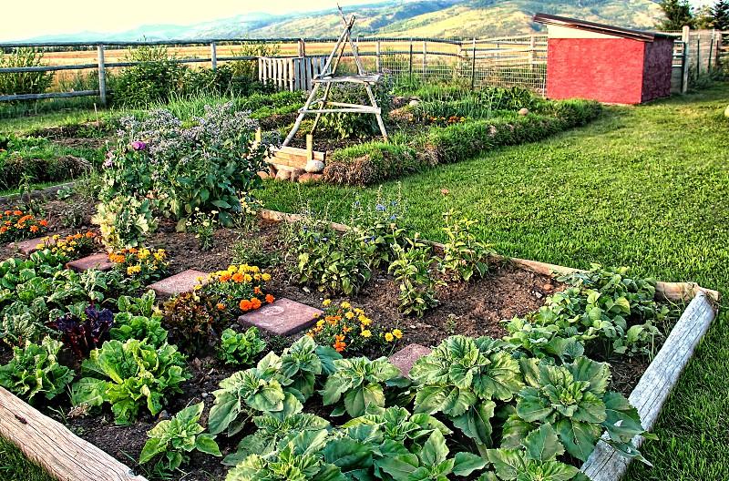 Small vegetable garden on a farm photo