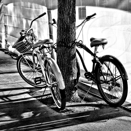 Black and white image of two bicycles parked near an urban tree on a city sidewalk photo