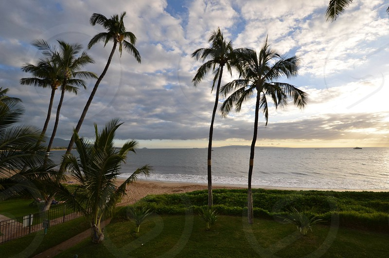 Hawaii Maui sand sun palm trees travel photo