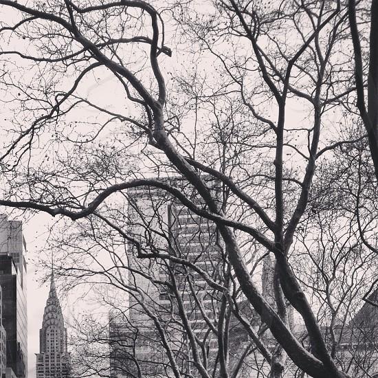 Winter Sunday Bryant Park  photo