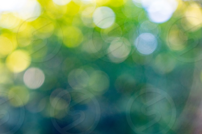 Blurred green foliage with sunlight. Natural background with yellow bokeh circles. photo