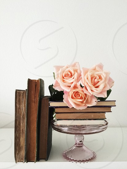 pink rose on brown book photo