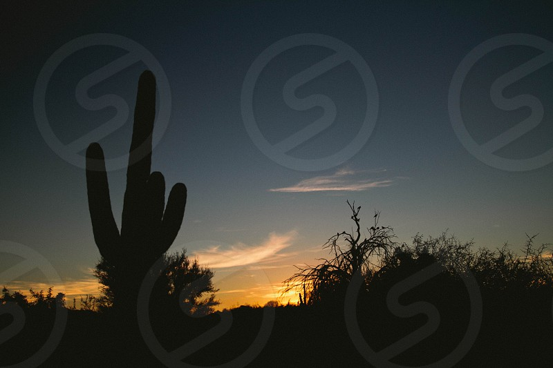 silhouette bush and cactus during dawn photo