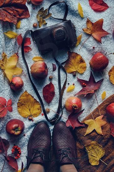 autumn vintage photo