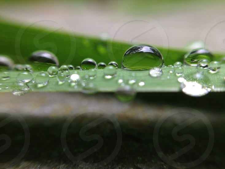 leaf with beads of water photo