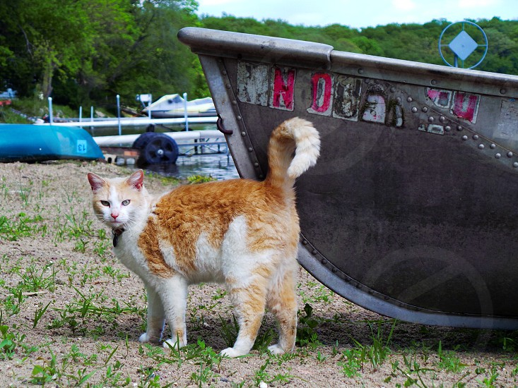 Lily a barn cat down by the lake enjoying the beginning of summer. photo