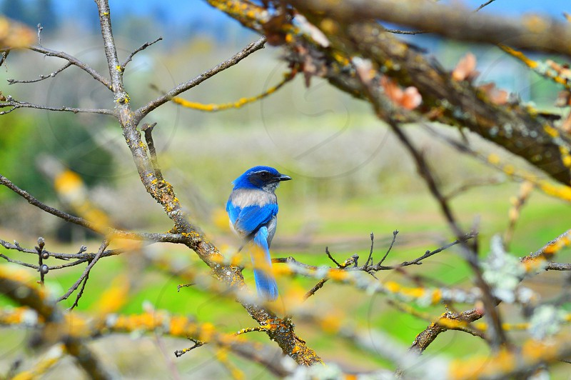 small blue and gray bird on a tree branch photo