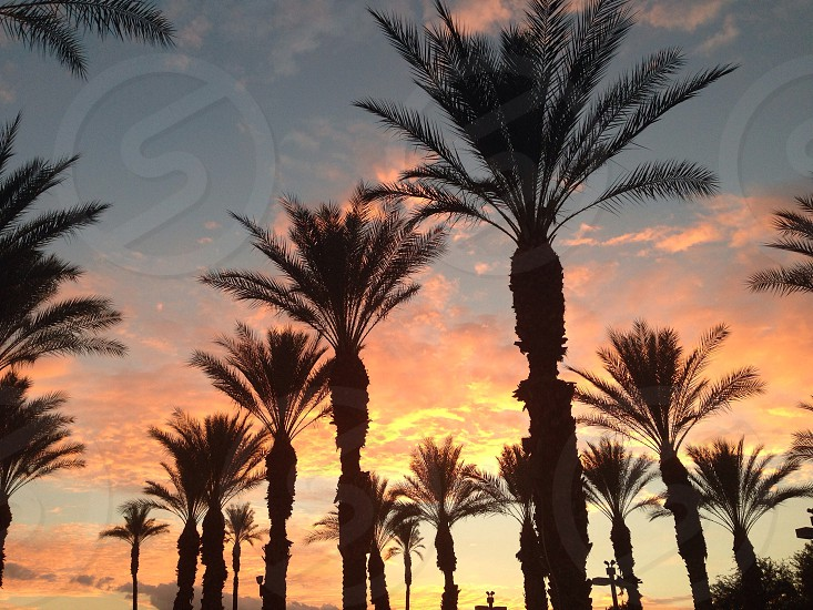 Palm Desert sunset photo