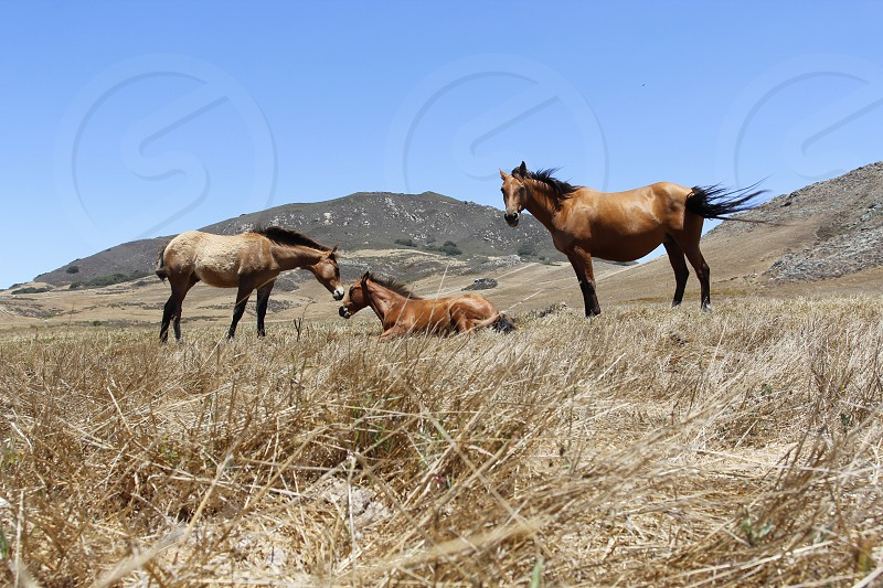 three brown horses nature photography photo