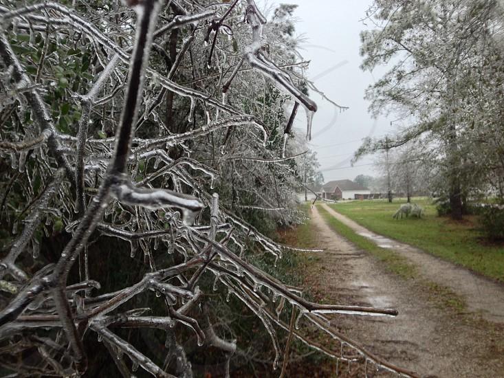 Photo of ice storm last winter.  photo