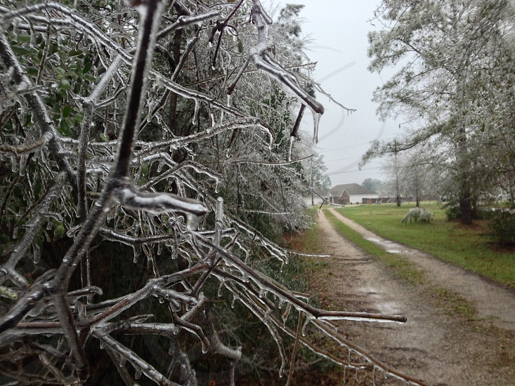 Ice Storm last year.  photo