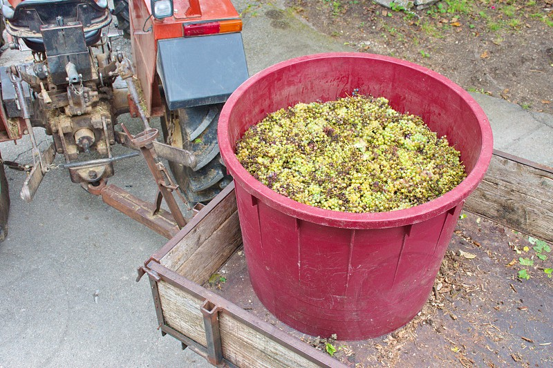High angle view of tractor trailer loaded with container full of grapes photo