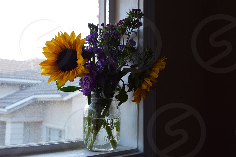 two sunflowers on clear glass vase near window of dimmed room photo