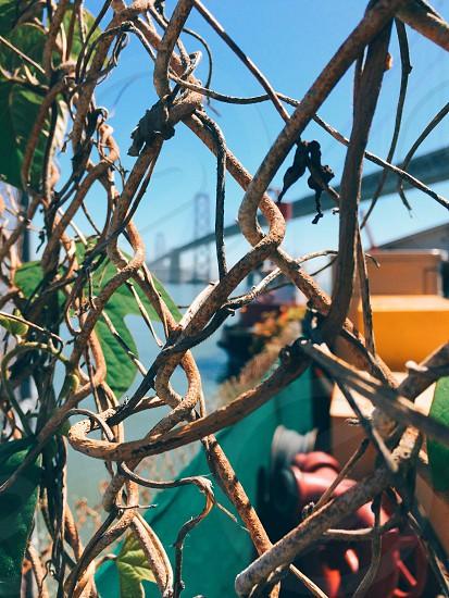 orange metal railing with black vines photo