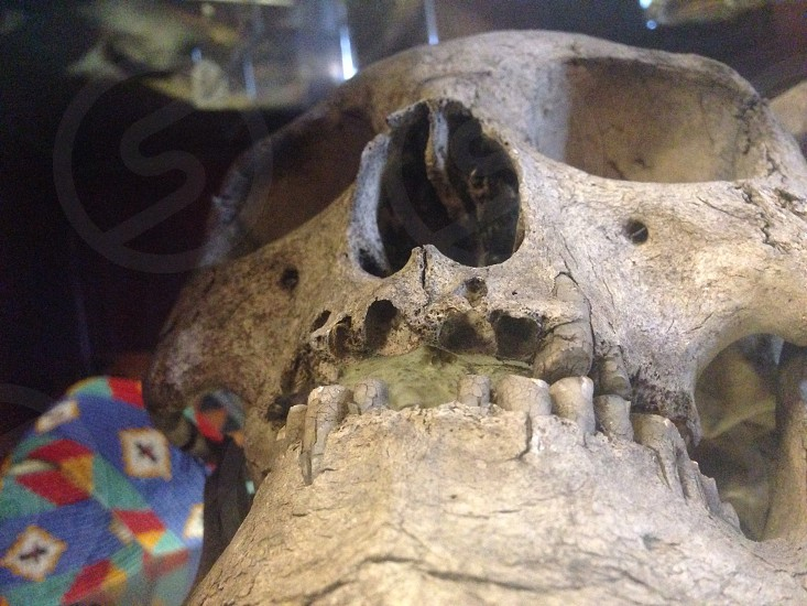 human skull in front photo