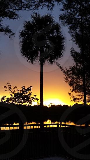 Sunset palm tree lake trees photo