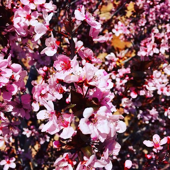 Spring blooms photo