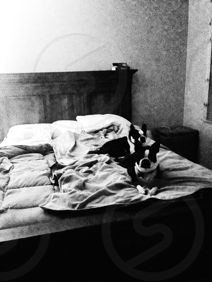Dogs lounging grainy - Ithaca NY photo