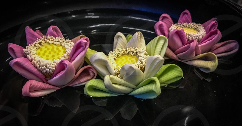Indoor night colour landscape horizontal flowers decoration decorative folded fold water lilies float Seam Reap Cambodia  photo
