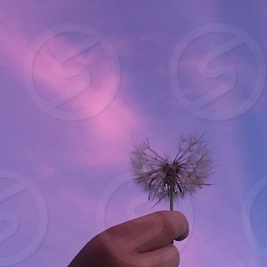 Make a wish...... photo