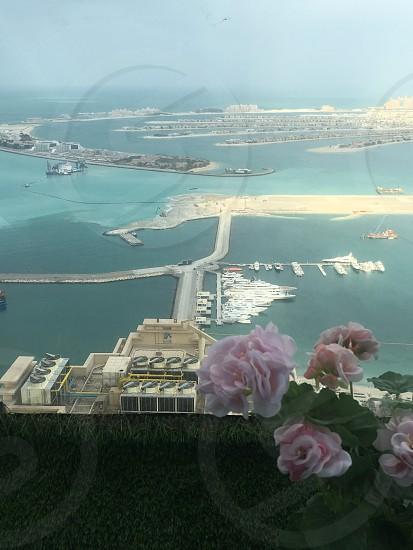 #Dubai#oceanview#flower photo