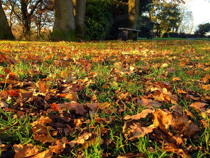 Autumndaysthecallingspotrespitebenchbeautifulcolouredleaves photo