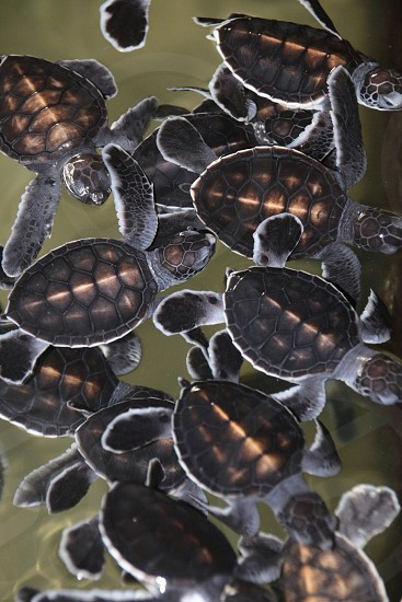 brown and black baby turtles photo