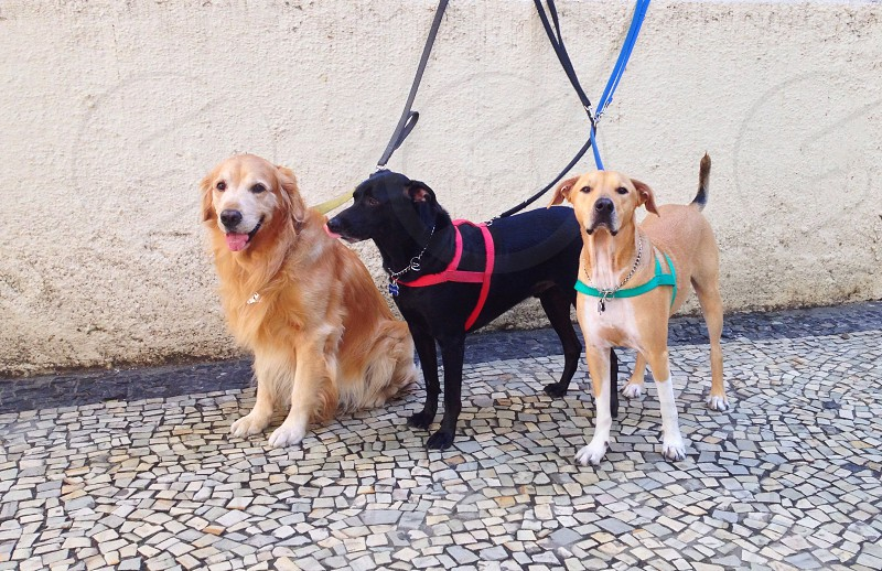 Curious Dogs photo