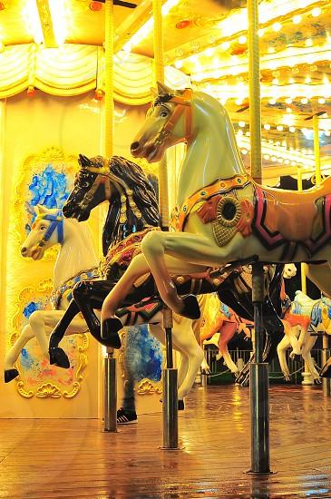 carousel horses photo