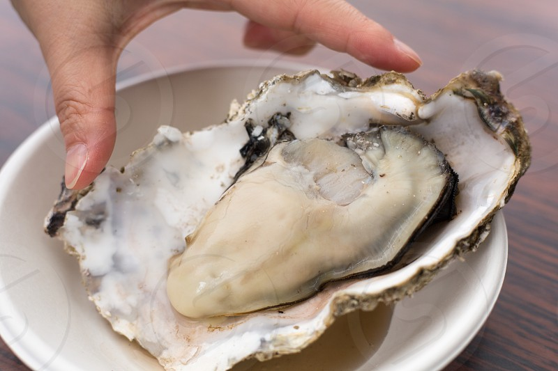 oyster photo
