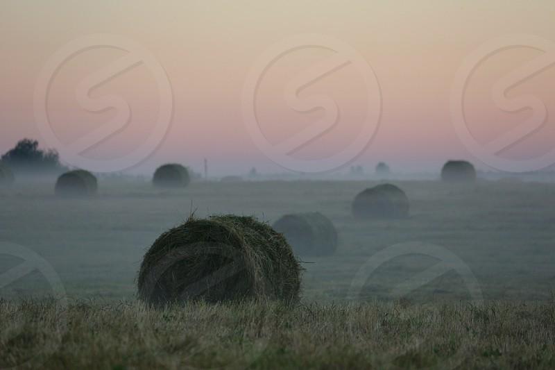Farm to table. Summer season  photo