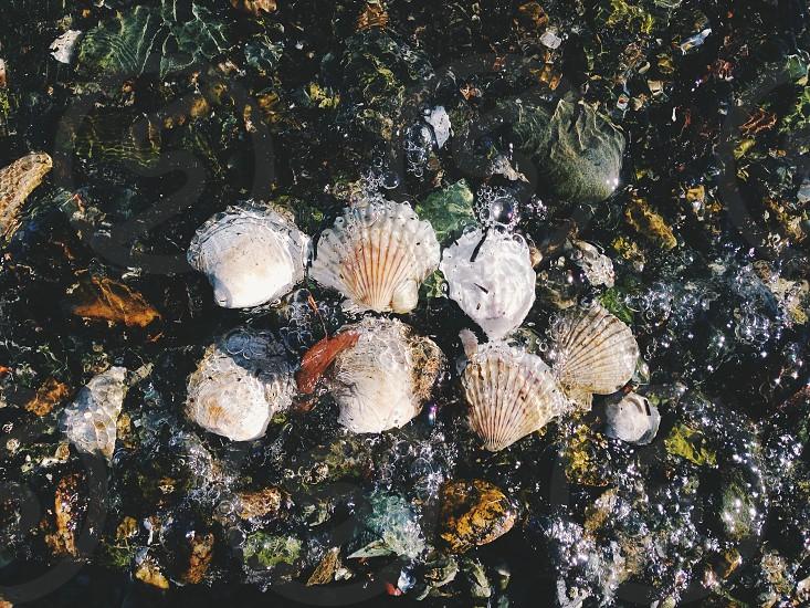 beige and white shells  photo