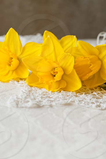 Yellow Daffodil flowers on lacy crochet doily indoors daylight setting. photo