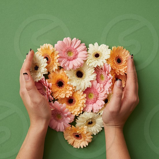 The girl's hands hold different fresh gerbera flowers on a green background. St. Valentine's Day. Mothers Day photo