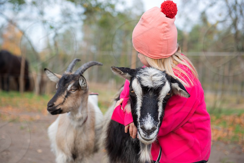 Little girl communicating with goat photo