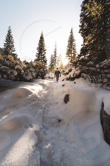 Hiking in the snow  photo
