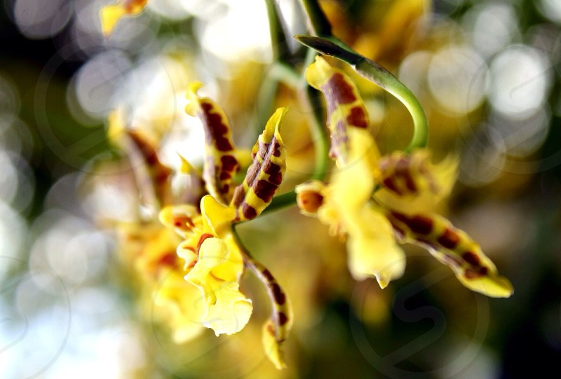 yellow and brown flowers on green stems  photo