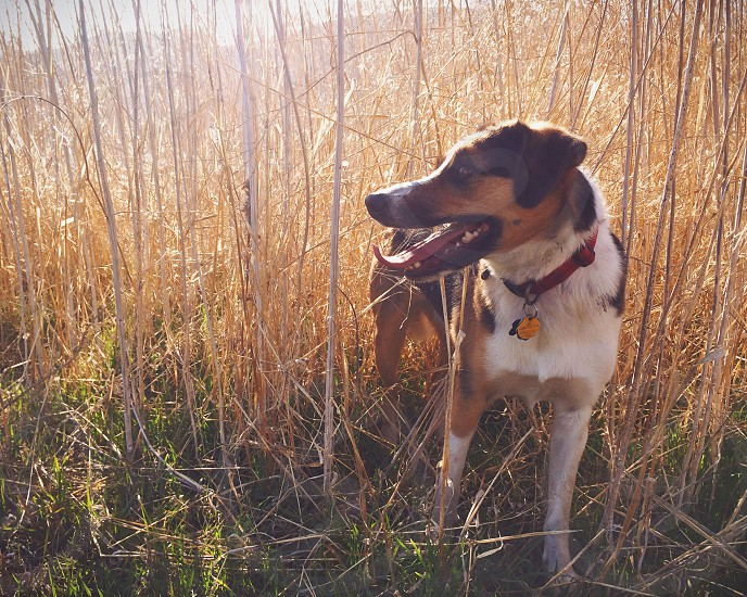 brown and white dog on green grass photo
