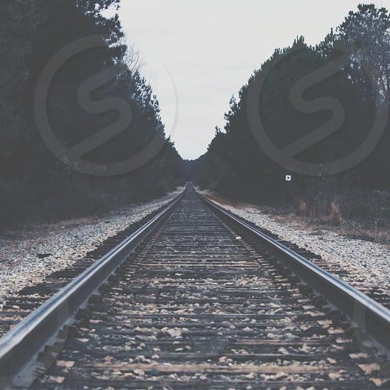 train rail between trees photo