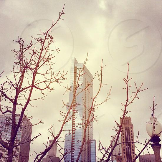 Chicago architecture  photo