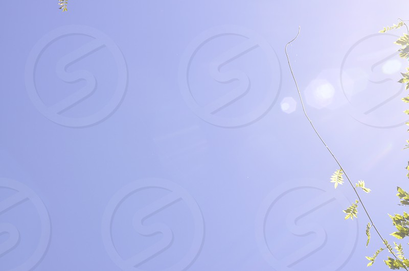 Vine stalks backlit against a blue sky with lens flare photo